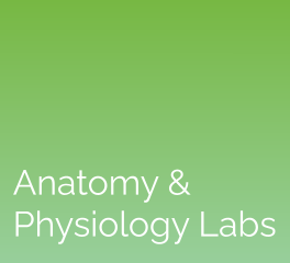 Anatomy & Physiology Labs: eScience Labs
