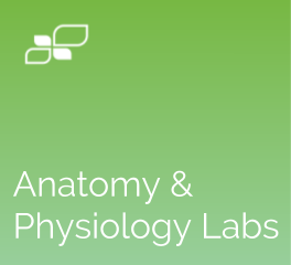 Anatomy and Physiology Labs