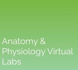 Anatomy & Physiology Virtual Labs: eScience Labs